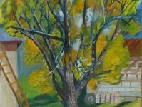 Ореховое дерево зимой